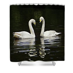 Shower Curtain featuring the photograph Whooper Swans by Sandy Keeton