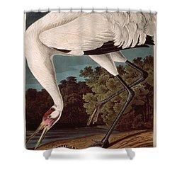 Whooping Crane Shower Curtain by John James Audubon