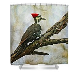 Who's There Shower Curtain by Lois Bryan