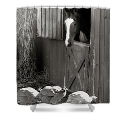 Why Did The Guinea Hen Cross The Road - Sepia Shower Curtain by Angela Rath