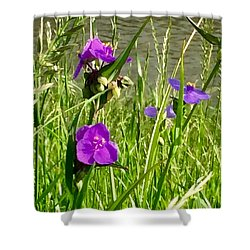 Wild About Violet Shower Curtain