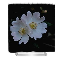 Wild And Tender Shower Curtain