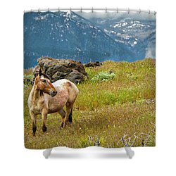 Wild Appaloosa Horse Shower Curtain