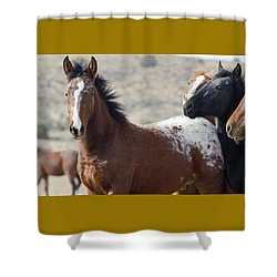 Wild Appaloosa Mustang Horse Shower Curtain