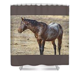 Wild Appaloosa Mustang Stallion Shower Curtain