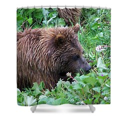 Wild Bear Eating Berries  Shower Curtain