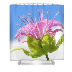 Wild Bergamot Or  Bee Balm Shower Curtain by Jim Hughes