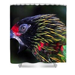Wild Bird Shower Curtain by David Lee Thompson