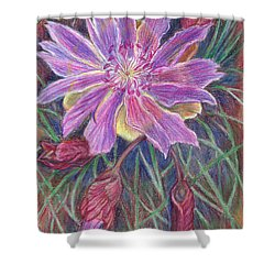 Shower Curtain featuring the drawing Wild Bitterroot Flower by Dawn Senior-Trask