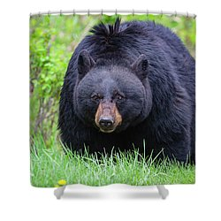Wild Black Bear Shower Curtain