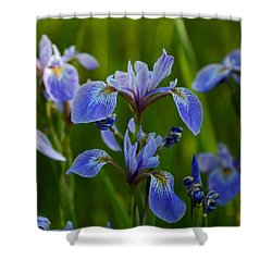Wild Blue Iris Shower Curtain