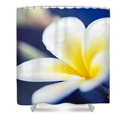 Wild Blue Morning Shower Curtain