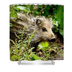 Wild Boar Baby Shower Curtain