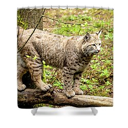 Wild Bobcat Shower Curtain by Teri Virbickis