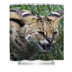 Shower Curtain featuring the photograph Wild Cat by Gary Bridger