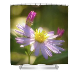 Wild Chrysanthemum Shower Curtain by Tatsuya Atarashi