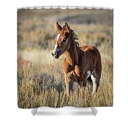 Wild Colt In Sand Wash Basin - Northwest Colorado Shower Curtain