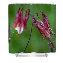 Wild Columbine - Aquilegia Canadensis Shower Curtain