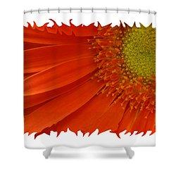 Shower Curtain featuring the photograph Wild Daisy by Shari Jardina