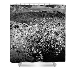Shower Curtain featuring the photograph Wild Desert Flowers Blooming In Black And White In The Anza-borrego Desert State Park by Randall Nyhof
