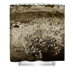 Shower Curtain featuring the photograph Wild Desert Flowers Blooming In Sepia Tone  by Randall Nyhof