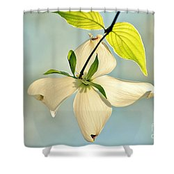 Wild Dogwood Bloom 2 Shower Curtain