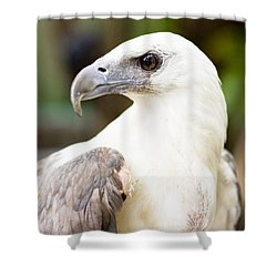 Shower Curtain featuring the photograph Wild Eagle by Jorgo Photography - Wall Art Gallery