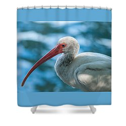 Wild Eyed Ibis Shower Curtain