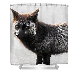 Wild Eyes Shower Curtain by David Lee Thompson