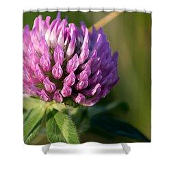 Wild Flower Bloom  Shower Curtain