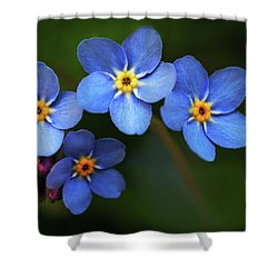 Wild Flower Forget-me-not Since The Middle Ages Symbolizes The Celestial Eye And Reminds You Of God Shower Curtain