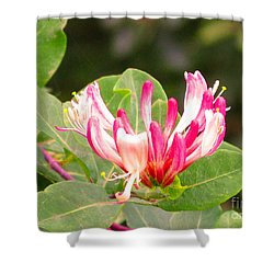 Shower Curtain featuring the photograph Wild Flower by Mini Arora