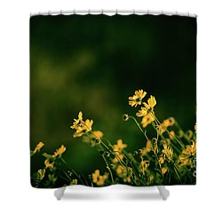 Evening Wild Flowers Shower Curtain by Kelly Wade