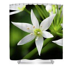 Wild Garlic Flower Shower Curtain