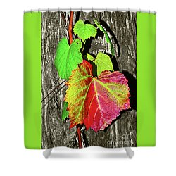 Shower Curtain featuring the photograph Wild Grape Vine By Kaye Menner by Kaye Menner