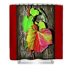 Shower Curtain featuring the photograph Wild Grape Vine II By Kaye Menner by Kaye Menner