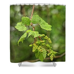 Wild Grapes 1992 Shower Curtain by Michael Peychich