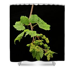 Wild Grapes 1995 Shower Curtain by Michael Peychich