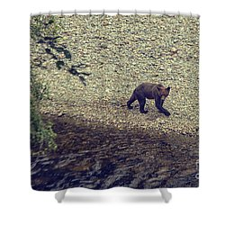 Wild Grizzly Bear Shower Curtain by Patricia Hofmeester