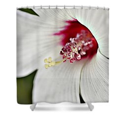 Wild Hibiscus Moscheutos_2a Shower Curtain