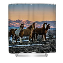 Shower Curtain featuring the photograph Wild Horse Group by Bryan Carter