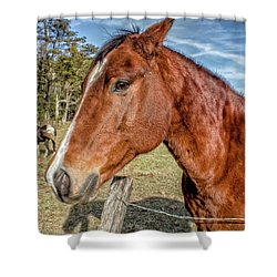 Wild Horse In Smoky Mountain National Park Shower Curtain