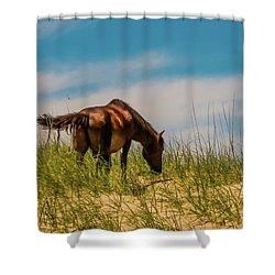 Wild Horse And Dragon Flies Shower Curtain