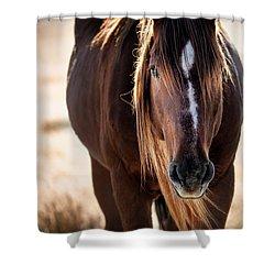 Wild Horse Watching Shower Curtain
