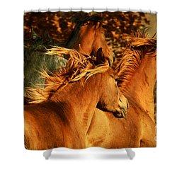 Wild Horses Shower Curtain