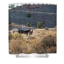 Shower Curtain featuring the photograph Wild Horses In Monument Valley by Jon Glaser