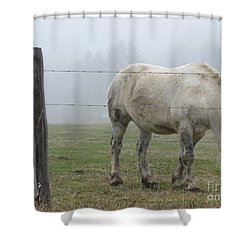 Wild Horses Shower Curtain by Michael Krek