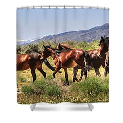 Wild Horses Of Nevada Shower Curtain by Donna Kennedy