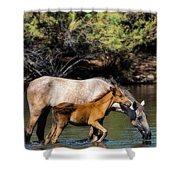 Wild Horses On The Salt River Shower Curtain