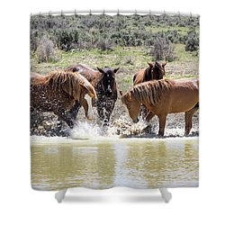 Wild Mustang Stallions Playing In The Water - Sand Wash Basin Shower Curtain